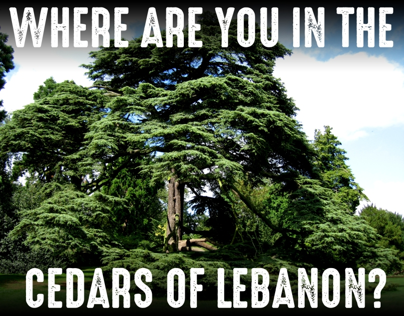 CEDAR OF LEBANON copy.jpg